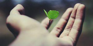 Growth through corporate venture building